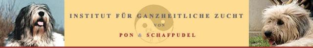 Schafpudel | PON | Familienhund